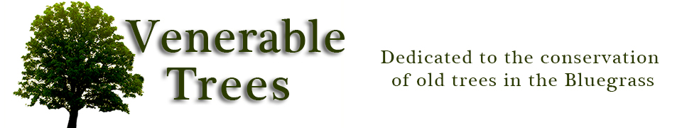 venerable Trees Logo