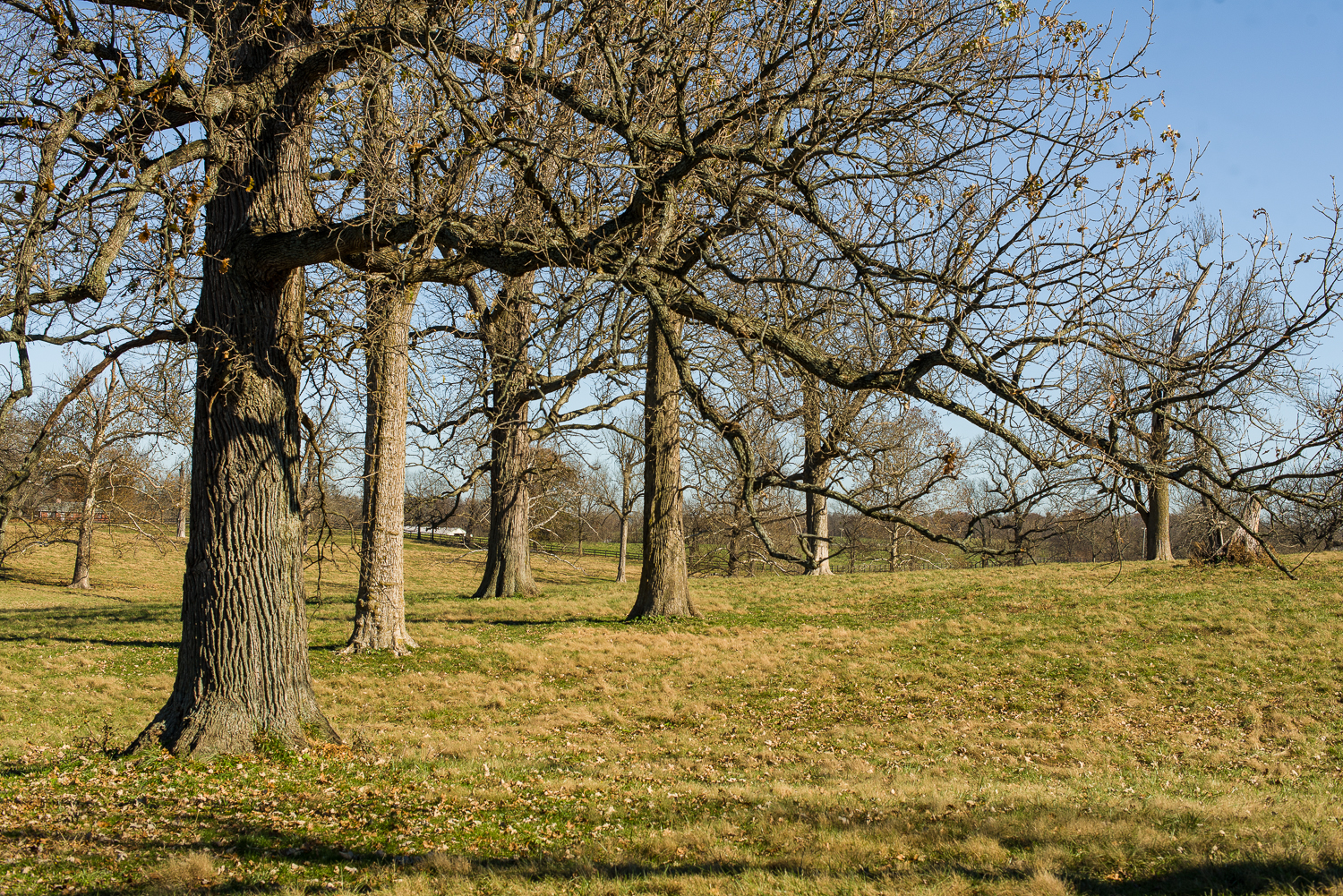 Woodland Pasture in Woodford County