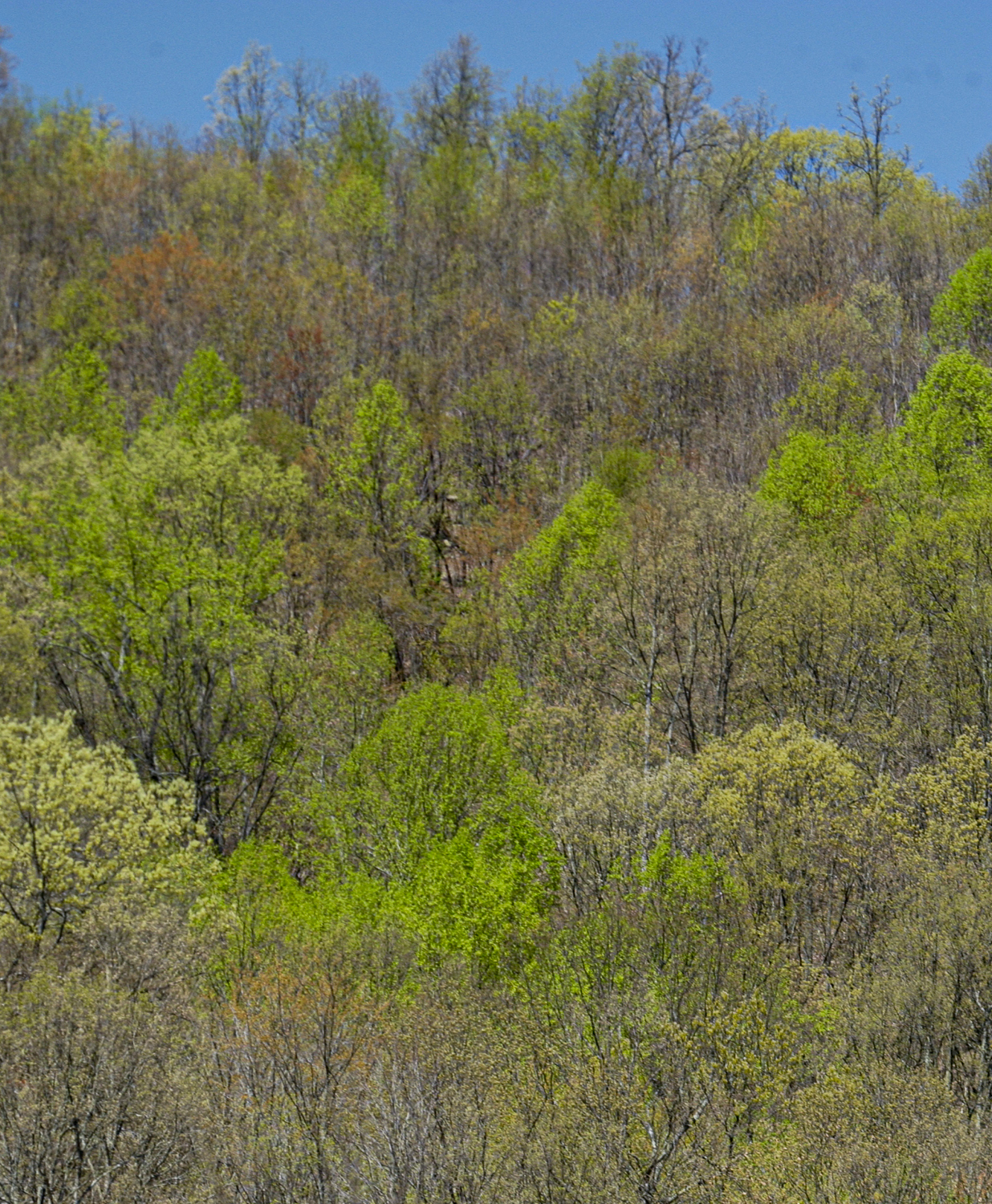A picture of Kentucky forests in early spring